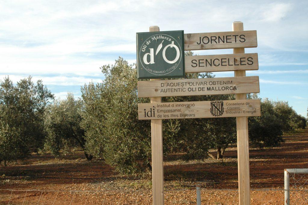 Més de 1.200 oliveres picual es troben a la finca